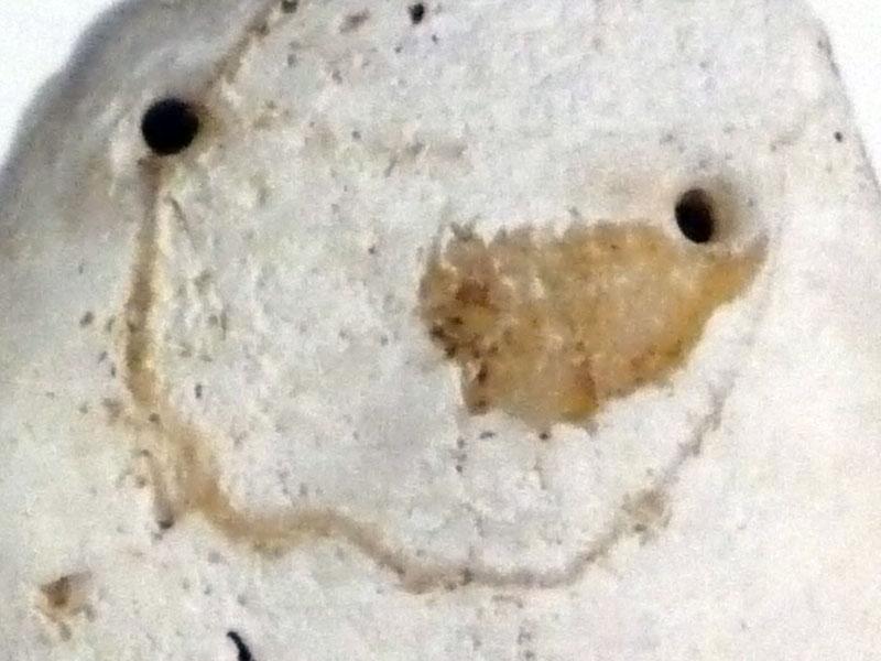 Le Pendentif du néolithique