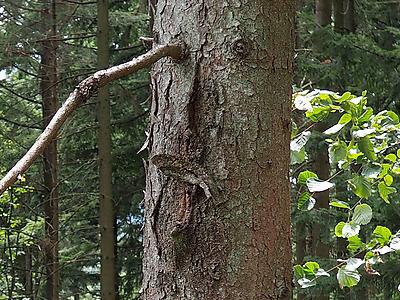 Le Tronc de l'arbre