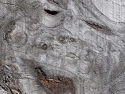 Un détail de Planche de palissade