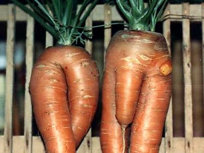 la_coop_les_figue_66_mretmme_carotte